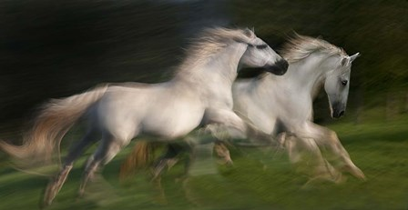 Gallop For Two by Milan Malovrh art print