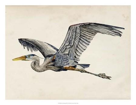 Blue Heron Rendering III by Melissa Wang art print