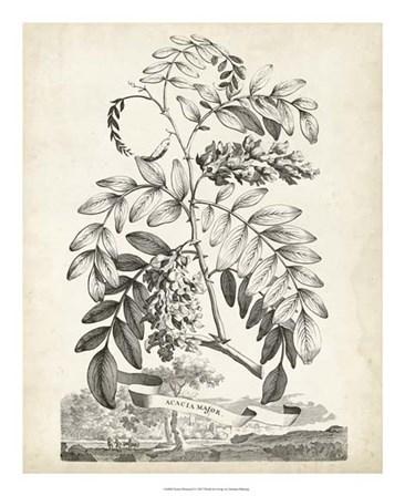Scenic Botanical I by Abraham Munting art print