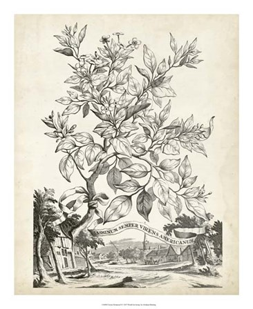Scenic Botanical II by Abraham Munting art print