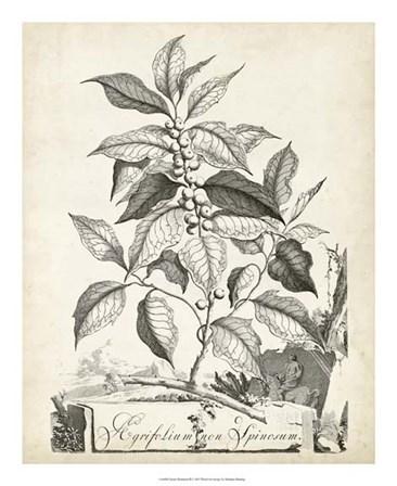 Scenic Botanical III by Abraham Munting art print