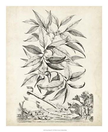 Scenic Botanical IV by Abraham Munting art print