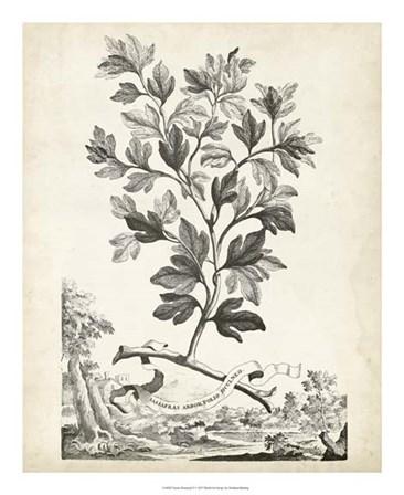 Scenic Botanical V by Abraham Munting art print