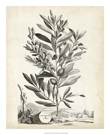 Scenic Botanical VI by Abraham Munting art print