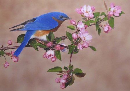 Bluebird by Clarence Stewart art print
