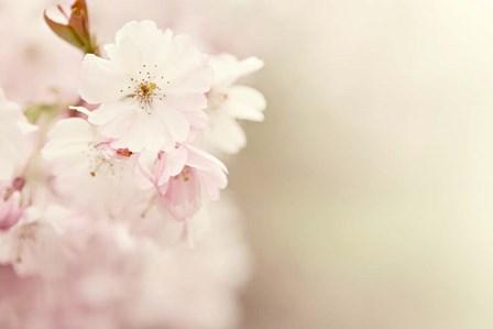 Spring Blossoms by Sarah Gardner art print