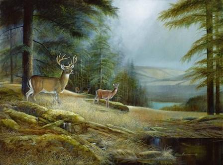 Mountaintop Retreat by Ruane Manning art print
