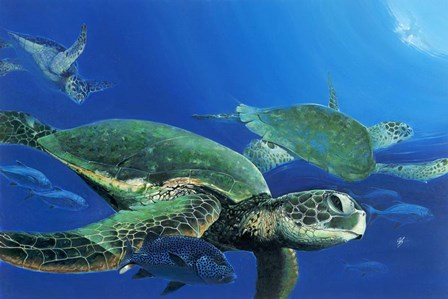Green Sea Turtles by Durwood Coffey art print