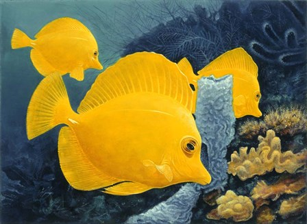 Yellow Tangs by Durwood Coffey art print