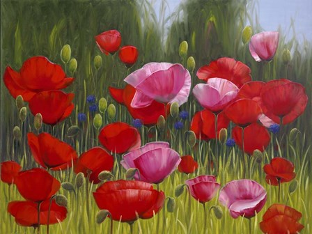 Red Poppies by Edward Park art print