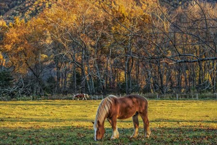Cades Cove Horses At Sunset by Galloimages Online art print