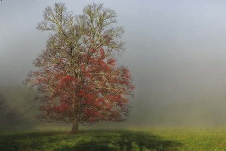 Cades Cove Tree by Galloimages Online art print