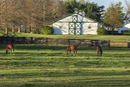 Horse Farm Landscape by Galloimages Online art print