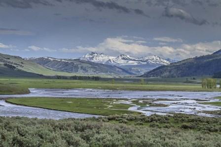 Lamar Valley (YNP) by Galloimages Online art print