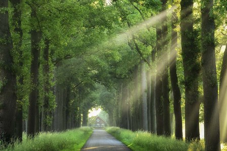 At The End Of My House There Is A Lane by Lars Van De Goor art print