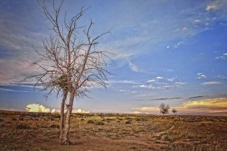 Wyoming High Desert Beauty by Amanda Smith art print