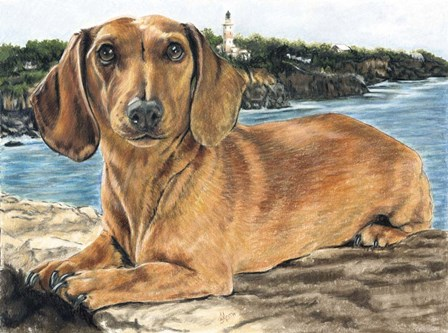 Dachshund In The Bay by Barbara Keith art print