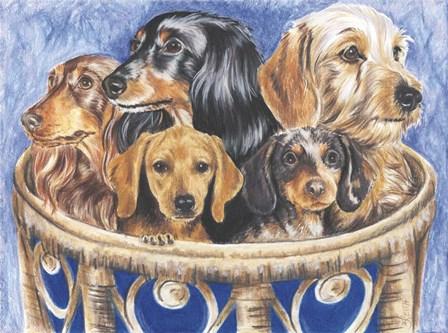 Dachsund In A Basket by Barbara Keith art print