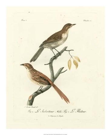 Antique French Birds I by de Langlois art print