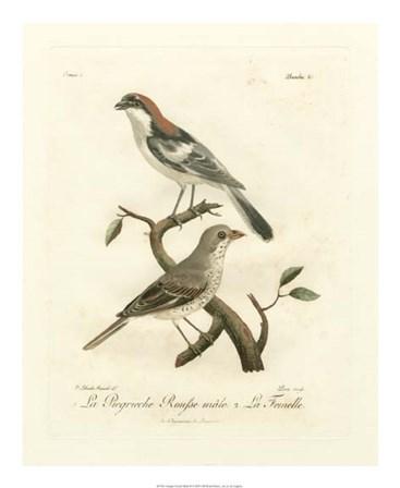 Antique French Birds II by de Langlois art print
