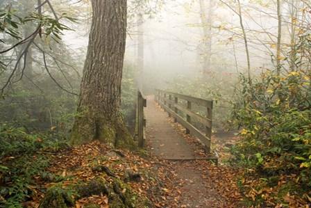 Alum Trail by Bob Rouse art print