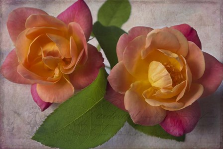 Two Roses by Bob Rouse art print