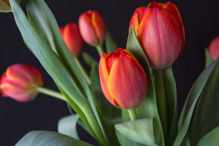 Spring Tulips by Bob Rouse art print