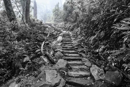 Chimney Tops Steps BW by Bob Rouse art print