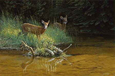 Fawn Brook by Michael Budden art print