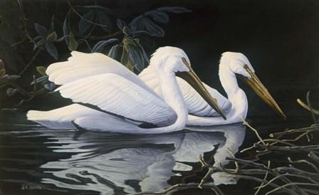 Pelicans by Michael Budden art print