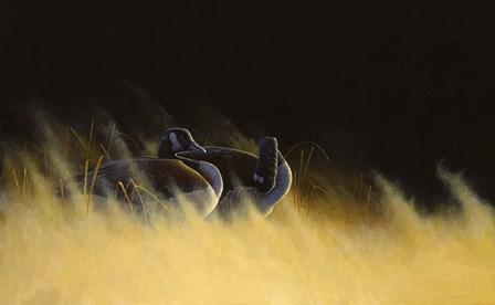 Morning Solitude by Michael Budden art print