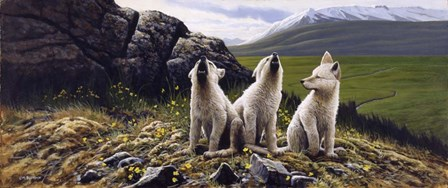 Three Wolves by Michael Budden art print