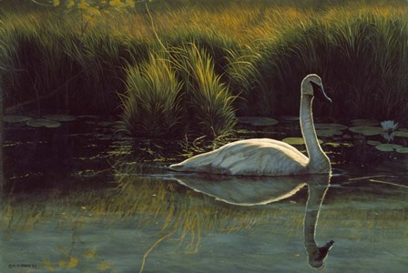 Reflections Of Grace by Michael Budden art print