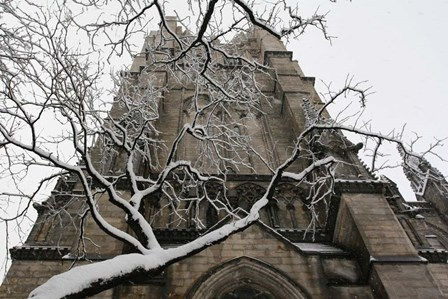 Branch Snow Cathedral 9688 by Robert Goldwitz art print