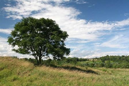 Lone Tree And Field by Robert Goldwitz art print