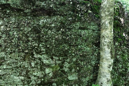 Tree Trunk Rock Wall by Robert Goldwitz art print