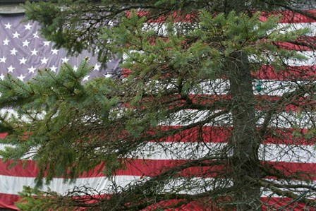 Pine Flag Barn by Robert Goldwitz art print