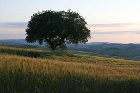 Tuscan Hillside by Robert Goldwitz art print