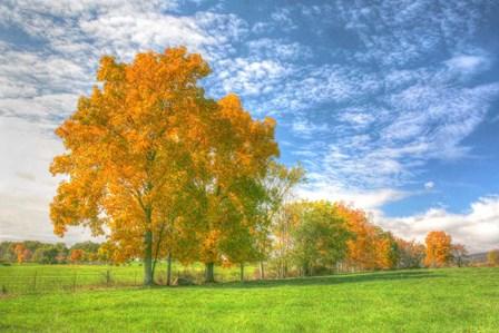 Autumn Tree Line by Robert Goldwitz art print