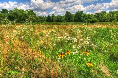 Late Summer Meadow by Robert Goldwitz art print