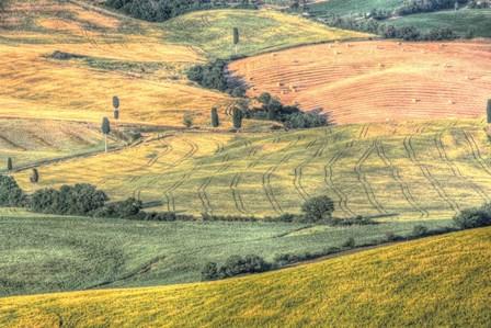 Tuscan Field Patterns by Robert Goldwitz art print