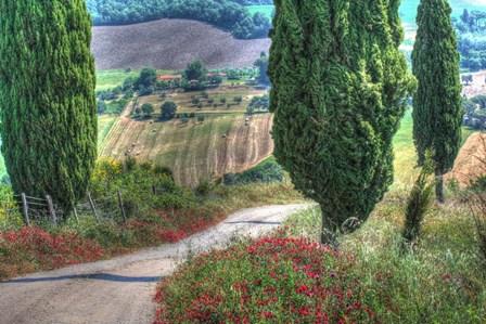 Tuscan Red Flower Road by Robert Goldwitz art print