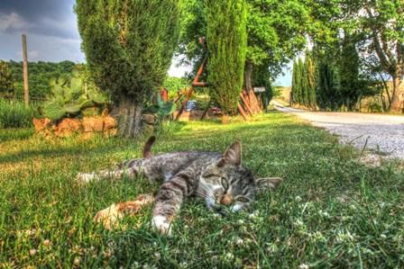 Tuscan Sleepy Cat by Robert Goldwitz art print