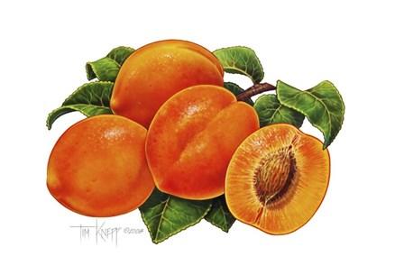 Peaches by Tim Knepp art print