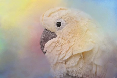 Every Day Is Colorful Umbrella Cockatoo by Jai Johnson art print