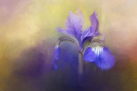 Tiny Iris by Jai Johnson art print