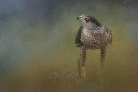 Evening Hawk by Jai Johnson art print