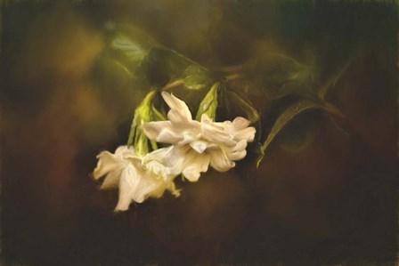 Gardenia In The Garden by Jai Johnson art print