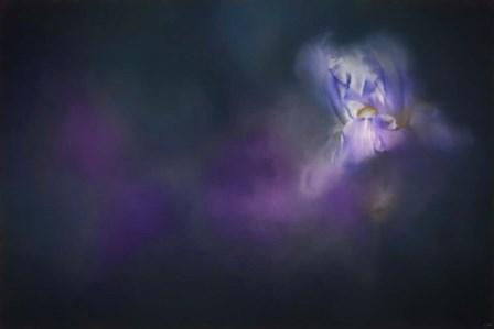 Iris Whisper by Jai Johnson art print