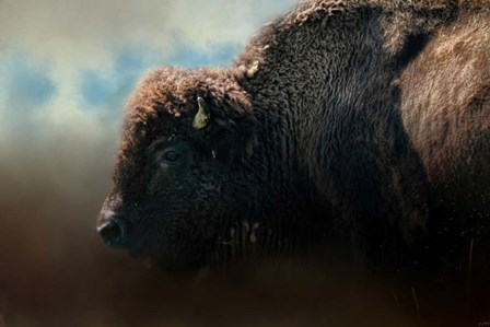 American Bison After The Storm by Jai Johnson art print